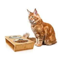 Lee más sobre el artículo Comederos para Animales