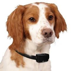 Mejor Collar de Adiestramiento para Perros